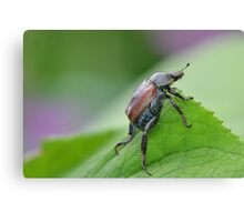 Welsh Chafer Canvas Print