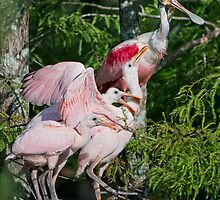 The Roseate Chicks are Growing! by Bonnie T.  Barry