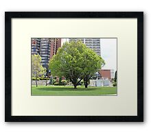 Tree in the city  Framed Print