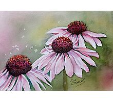 PINK CONE / DAISY FLOWER Photographic Print