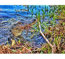 Friendly Gator  Photographic Print