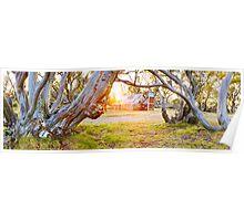 Wallace Hut, Falls Creek, Victoria, Australia Poster