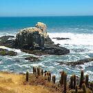 Punta de Lobos .....! by cieloverde