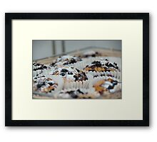 Chocolate chip cup cakes Framed Print