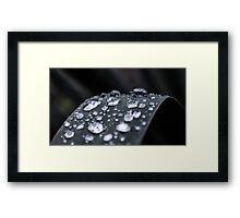 Dew Drops #1 Framed Print