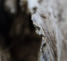 Driftwood - Sliver of Focus by erbeining