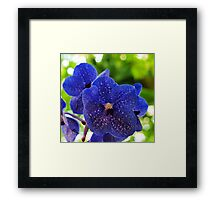 Orchids On My Pillow Framed Print