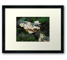 Fungi Clan Framed Print