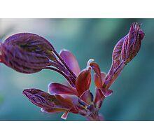 Violet Flower Photographic Print