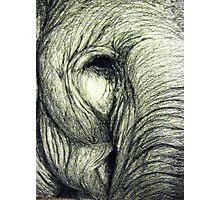 Elephant graphic illustration Photographic Print