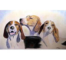 Middleburg Hounds Photographic Print