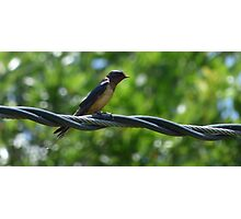 Bird on a wire. Photographic Print