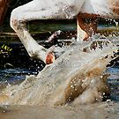 Palomino Paint Horse makes a splash by Val  Brackenridge