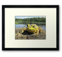 Posing Frog Framed Print
