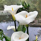 Calla Lilies . by Irene  Burdell