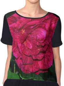 Hot pink and Red Intuition Rose Leith Park Victoria 20160511 6963  Chiffon Top