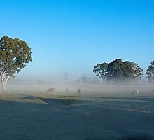 Cows grazing in lifting fog, Murray Bridge SA by Mark Richards