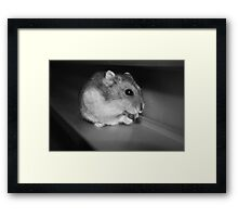 Pursuit of the Sunflower Seed Framed Print