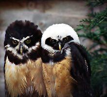 Baby B&W Owlets by mrcoradour