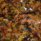 Autumn leaves 1 by Jaycee2009