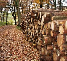 Log Stack at Bolton Abbey by Annette Brown
