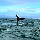 whale tail 3 by shaft77