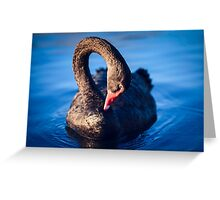 Native Black Swan Greeting Card