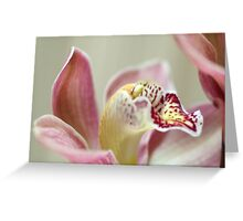 Cymbidium Orchid Greeting Card