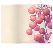 Autumn Orange Berries Poster