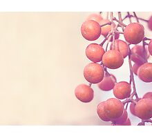 Autumn Orange Berries Photographic Print
