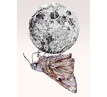 In which a moth is enticed by the light of the moon Photographic Print