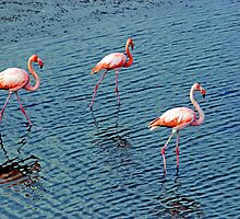 Flamingoes In The Galapagos Painting by Al Bourassa