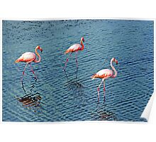 Flamingoes In The Galapagos Painting Poster
