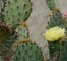Prickly Pear Finery by Bryan Shane