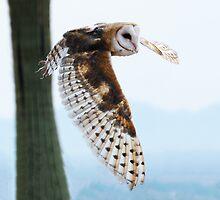 Barn Owl Rising by Bryan Shane