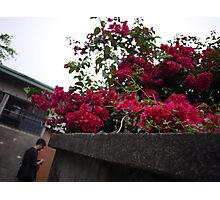 red flowers at old small lane Photographic Print