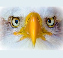 Eyes of the Wild by Dave  Knowles