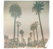 Beverly Hills Palm Drive Texture California Poster