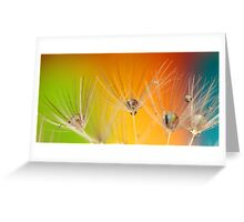 COLOURED DANDELIONS Greeting Card