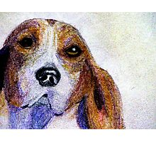 A Soulful Hound Photographic Print