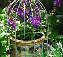 Captive Flowers by Kris  Kennedy