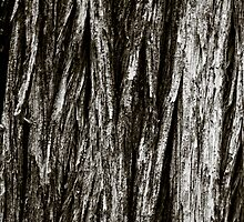 Wood Bark 2 by Brent Fennell