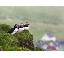 Three Puffins Photographic Print