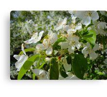 White Blossoms #2 Canvas Print