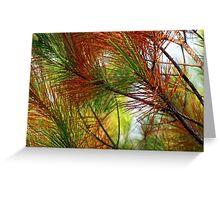 pine brush Greeting Card