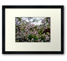 Pink and White Blossoms #2 Framed Print