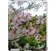 Pink and White Blossoms #2 iPad Case/Skin