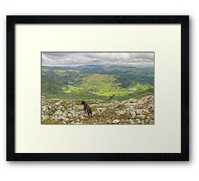 The Fell Terrier Framed Print