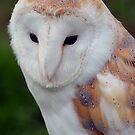 Barn Owl by Carol Bleasdale