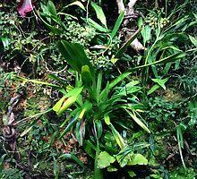 Rainforest Plants by Kat Murphy-Nemsik